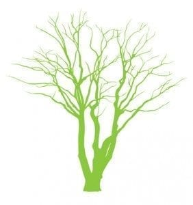 Identify_treeshape@2x