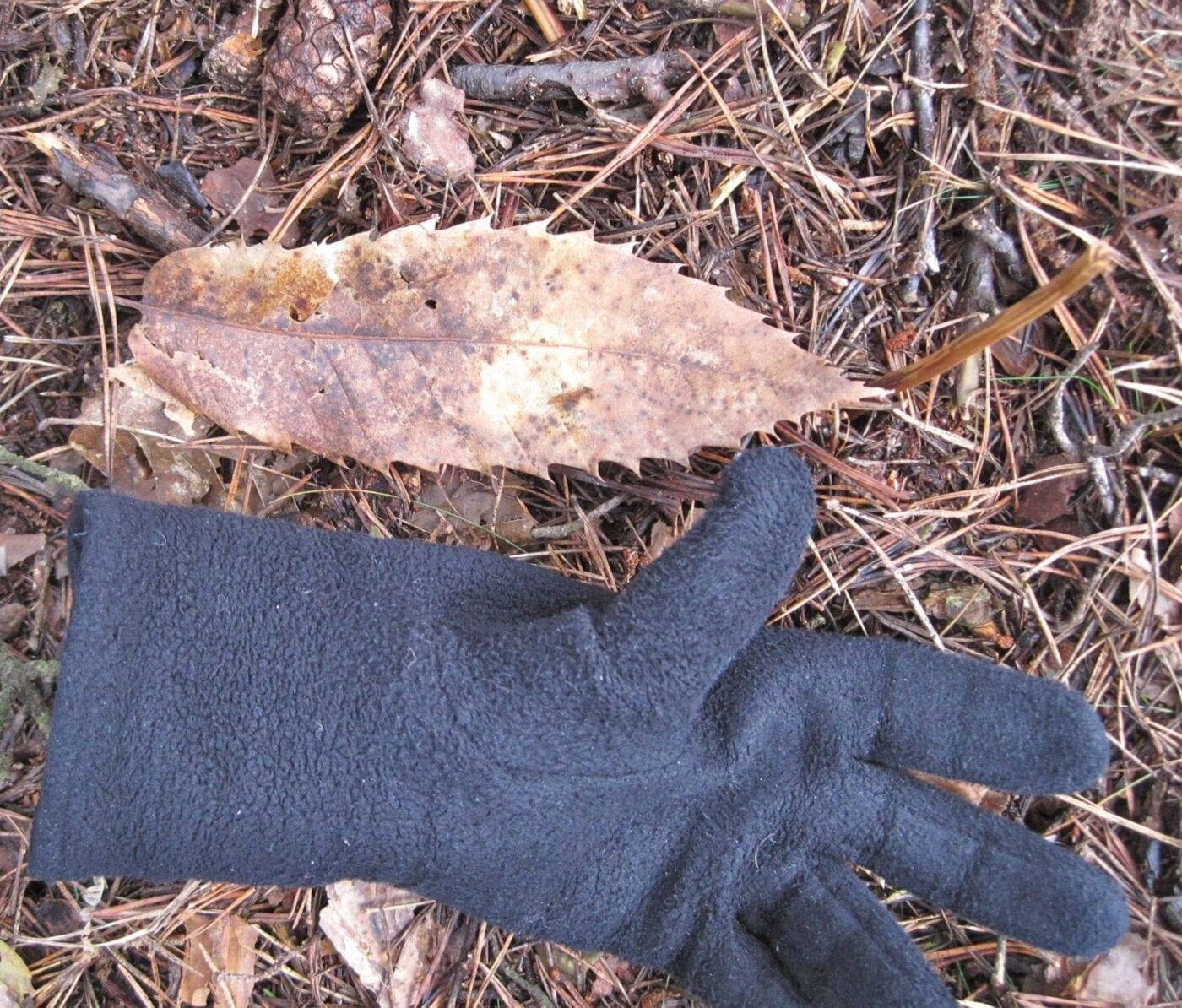 Sweet Chestnut leaf in winter