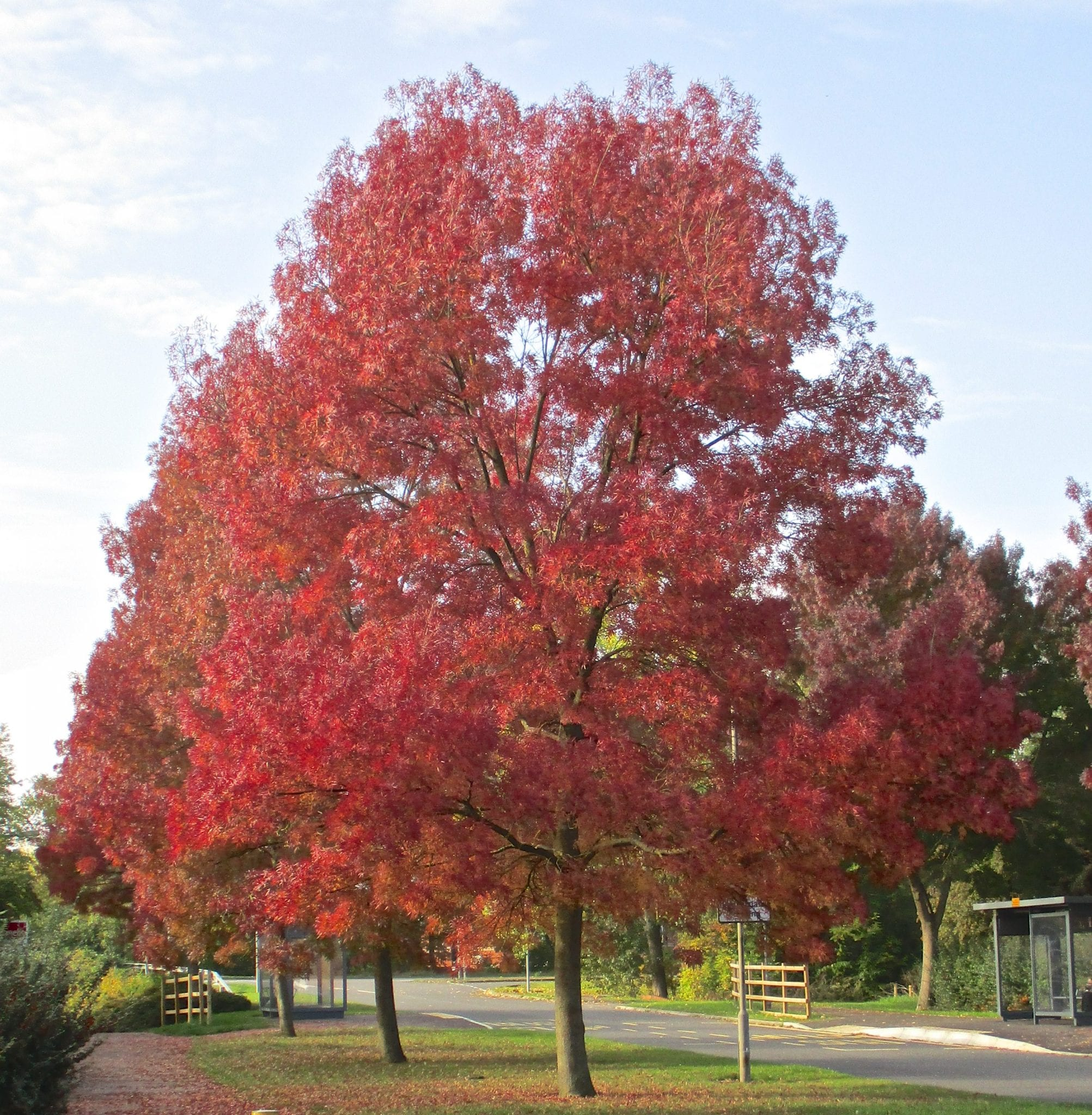 Trees In Autumn Tree Guide Uk