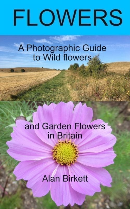 eBook cover - wild and garden flowers and their families