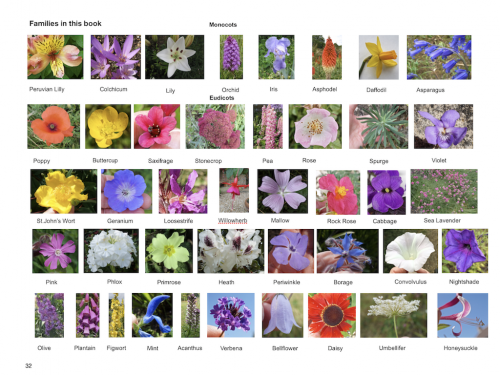 Flowers eBook sample page - wild and garden flower families