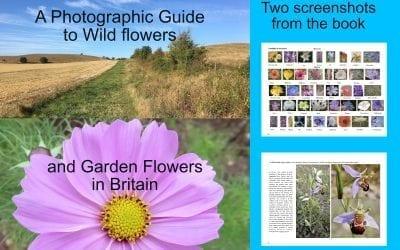 Flowers eBook Released