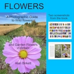 flowers photographic guide