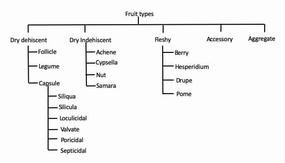 friut types botanical classification