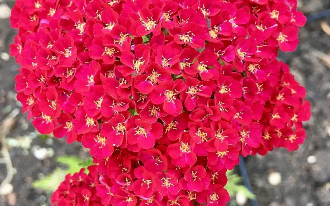 Flowers in July