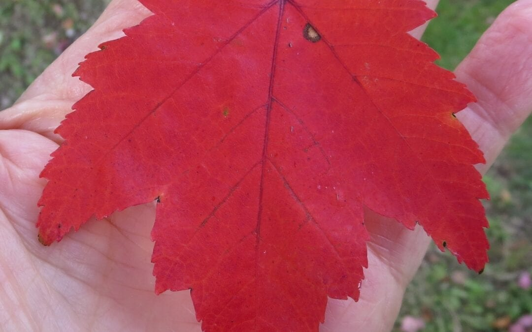 Autumn Leaf Colours