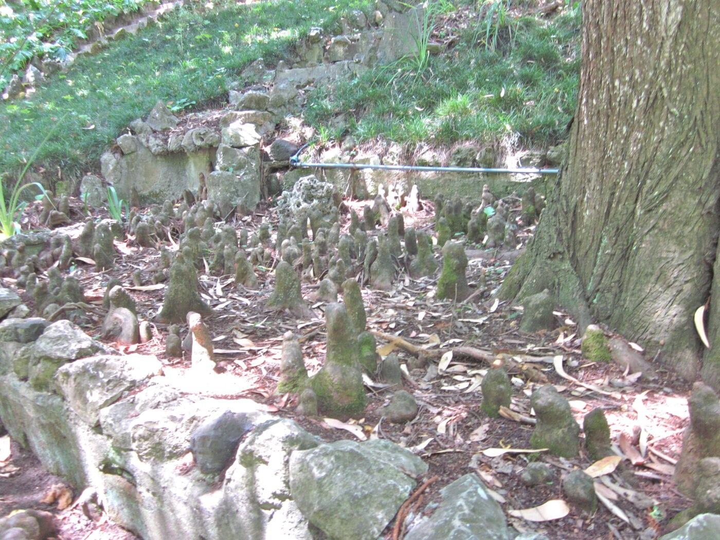 Swamp Cypress 'knees'